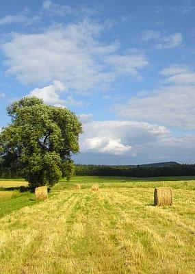 Вид на поле