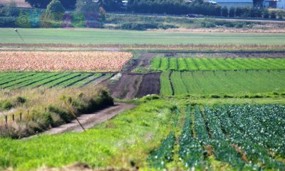 Максимальный срок аренды земельного участка сельхозназначения